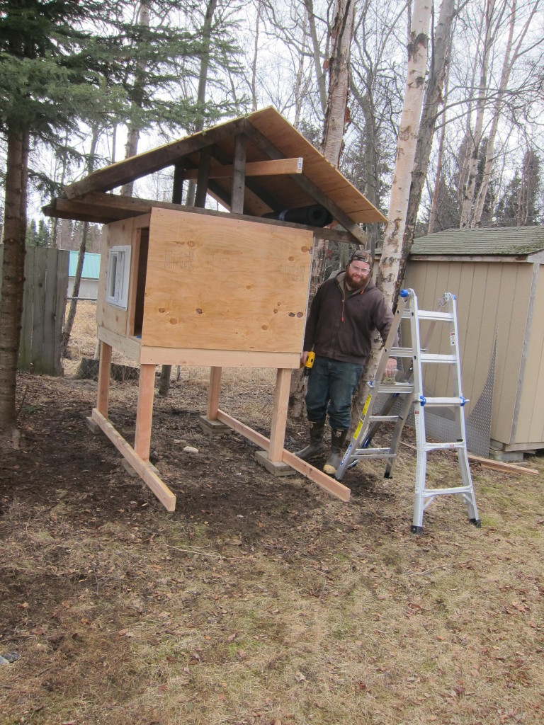 DIY chicken coop - step 3