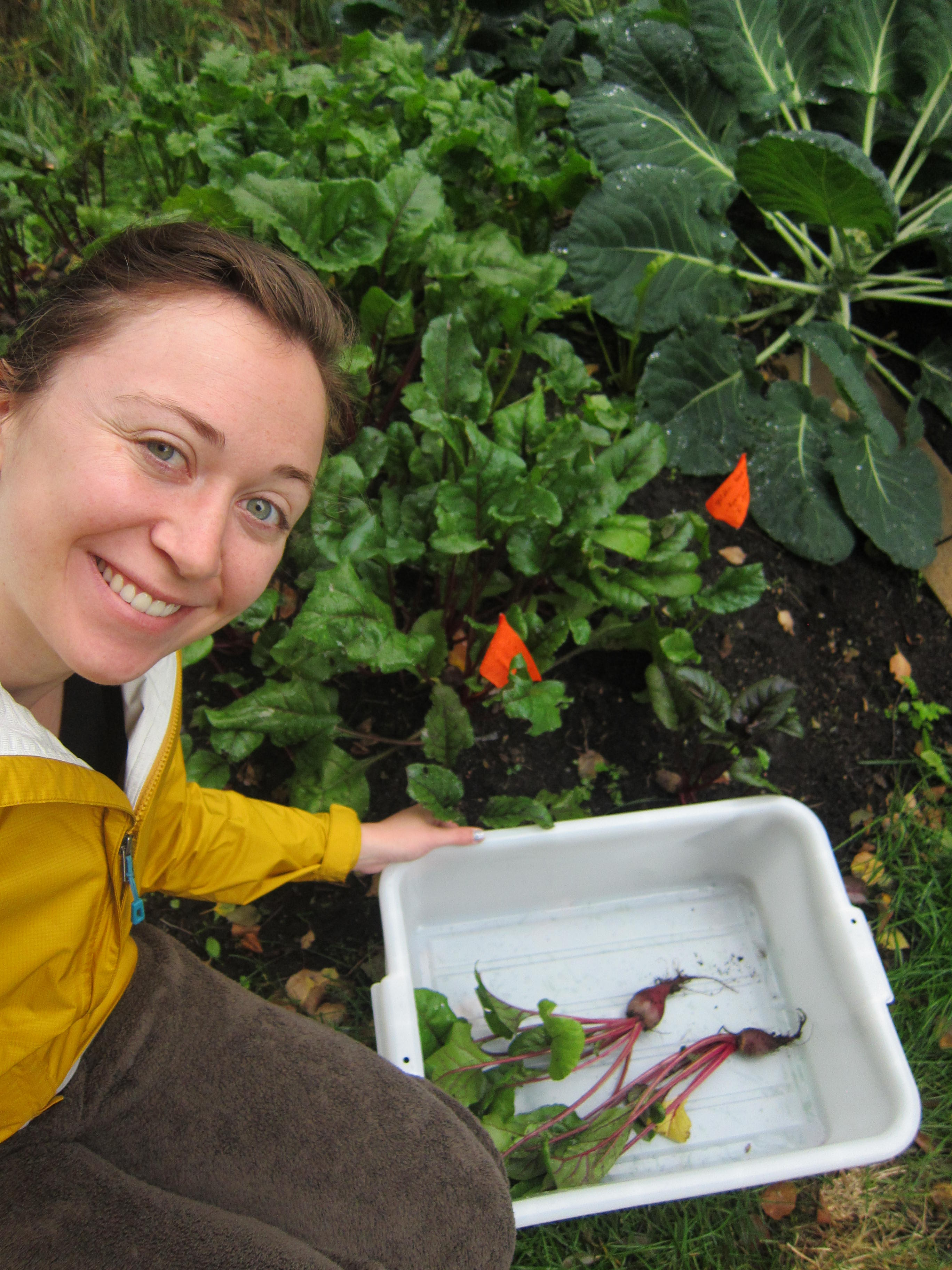 Ashley Taborsky harvesting beets from her garden