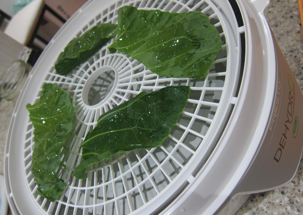 brussel sprout leaves on dehydrator