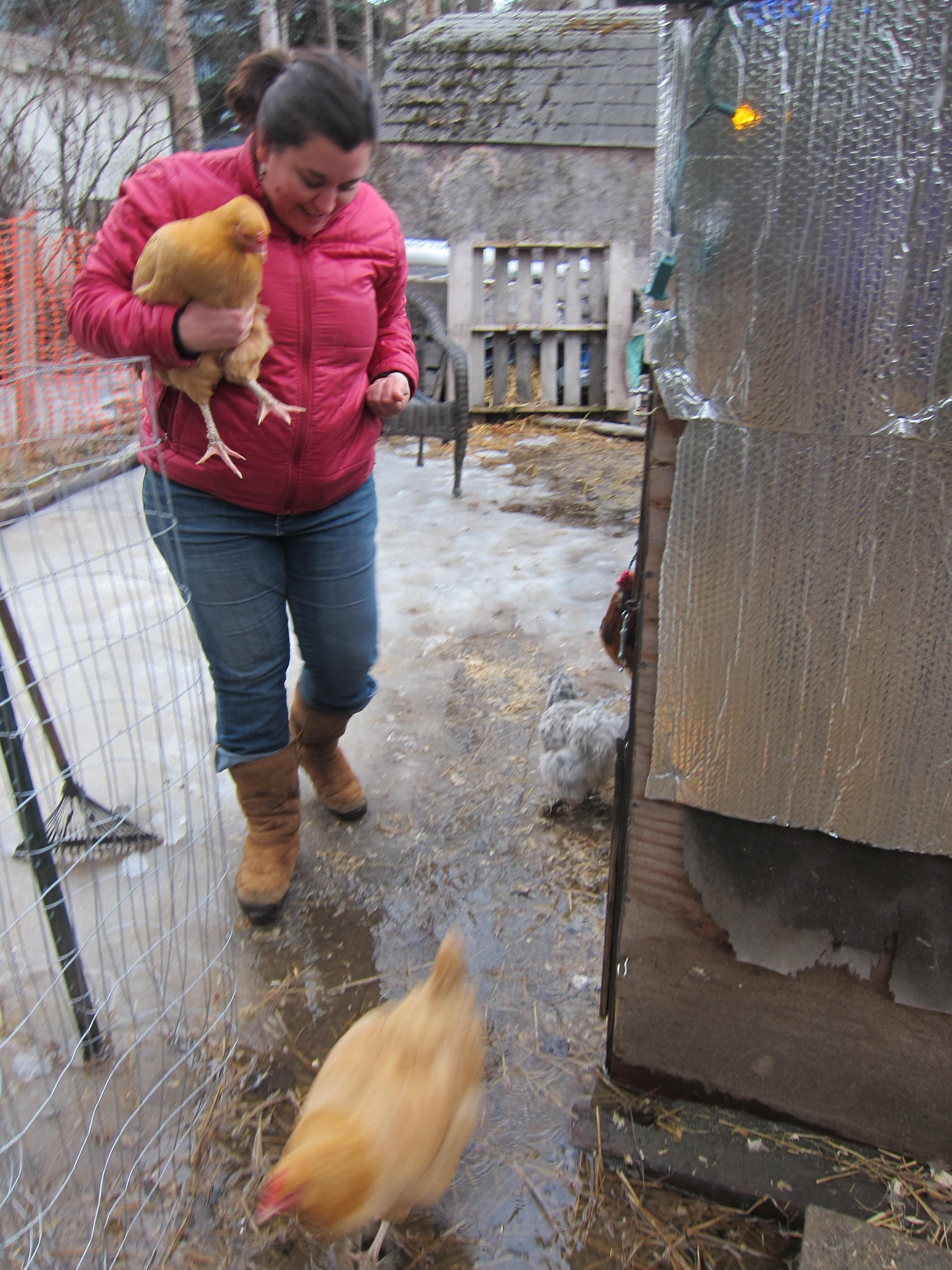 woman holding buff orpington