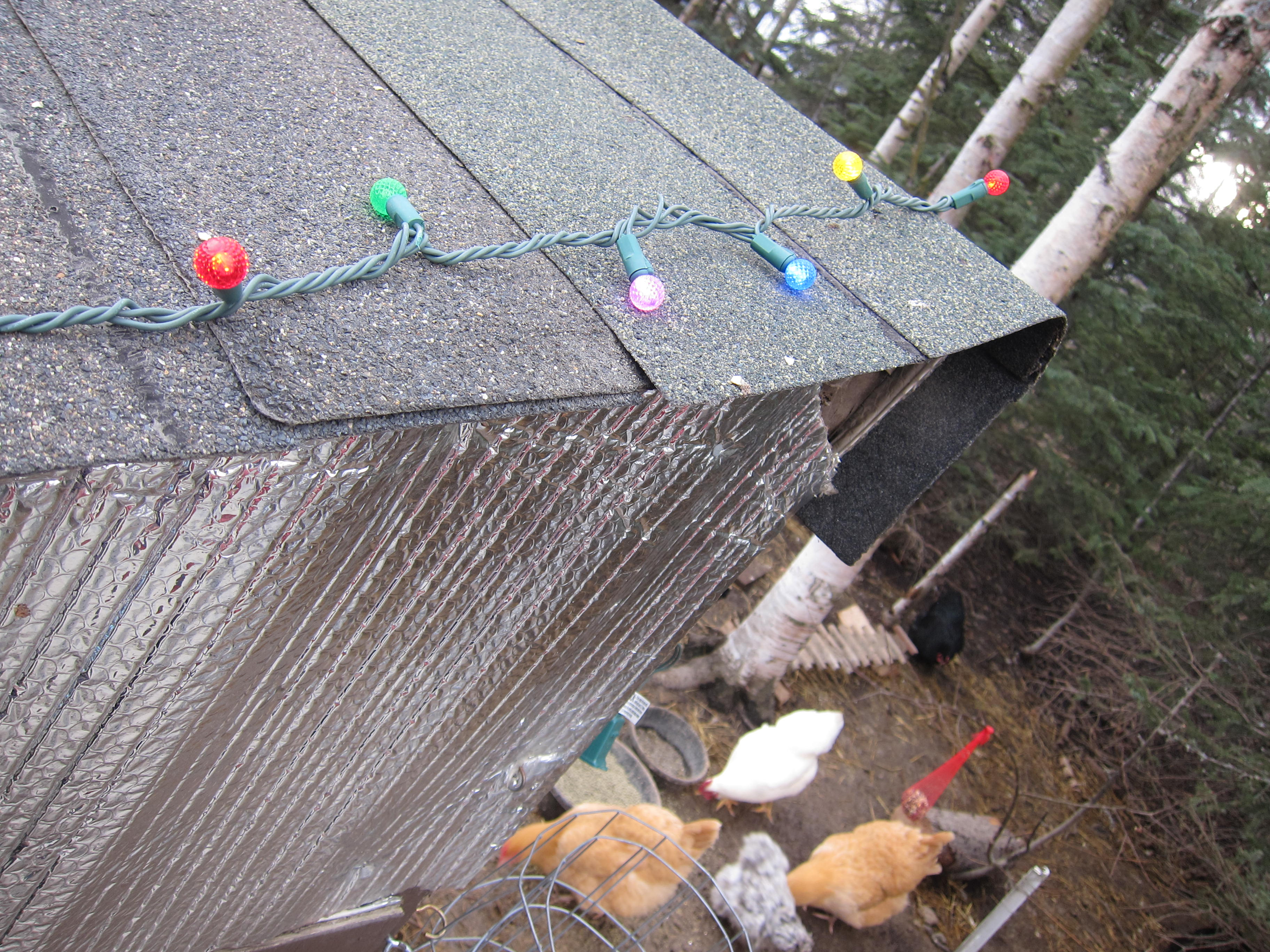 colored string light on chicken coop roof