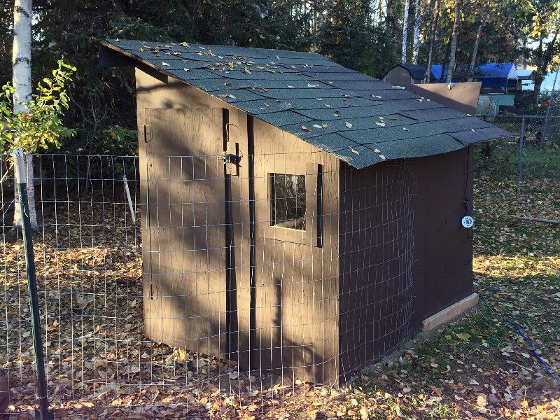 Anchorage backyard chicken coop