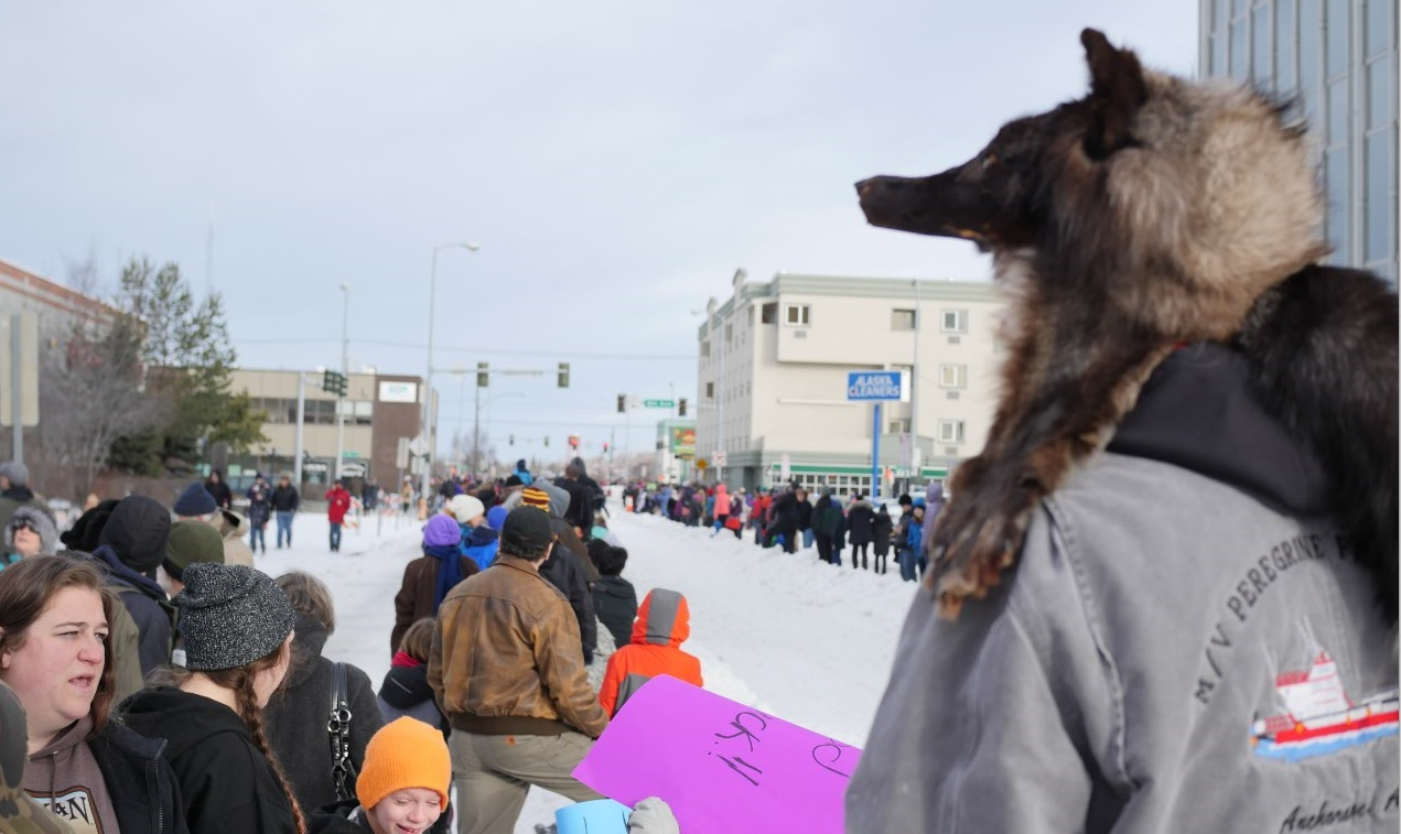 2016 Iditarod sled dog Anchorage start