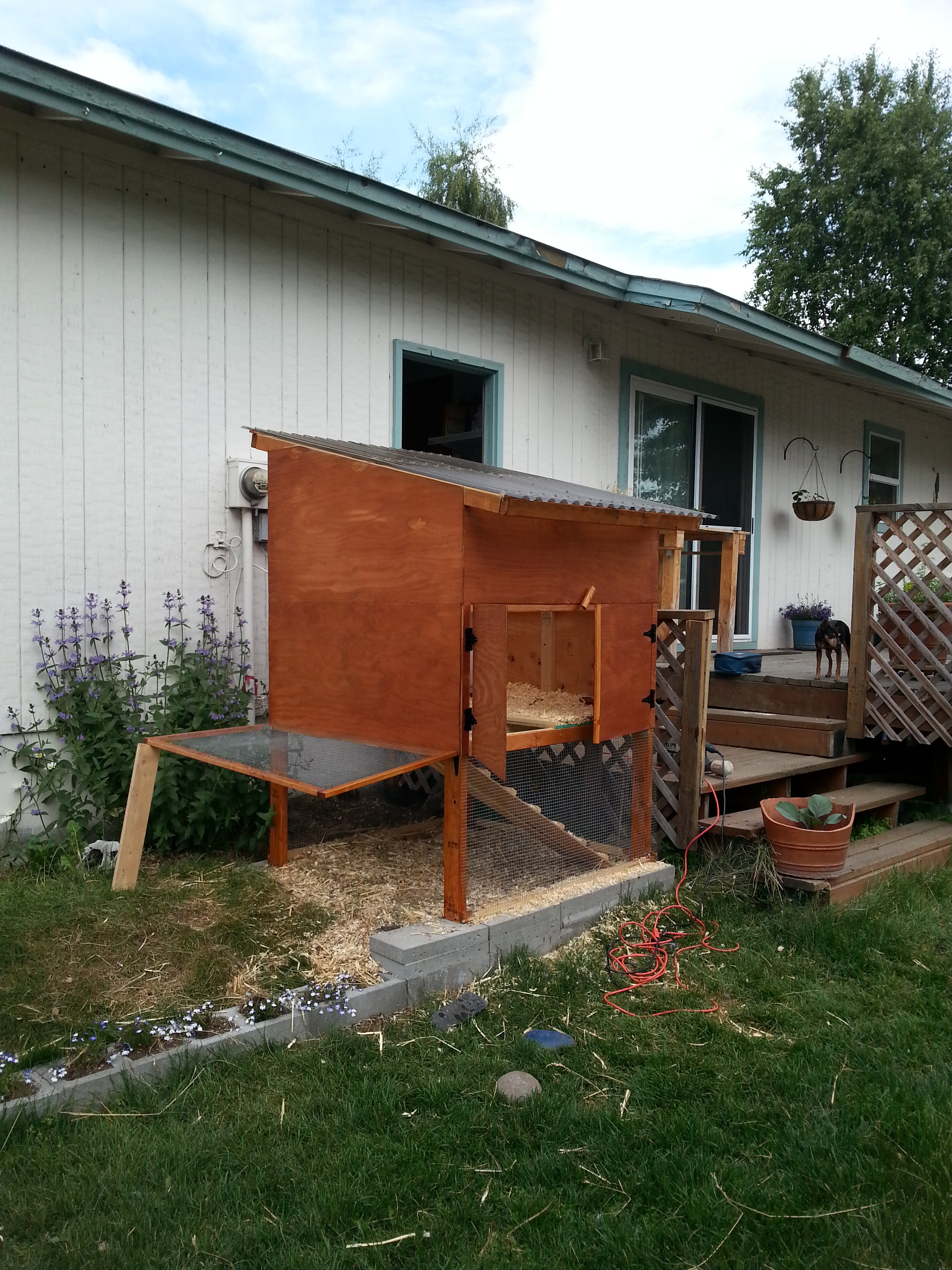 new chicken coop freshly stained