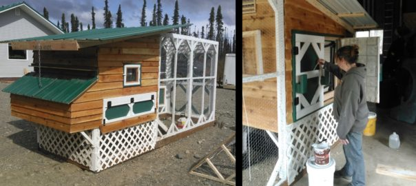 chicken coop in Willow, AK