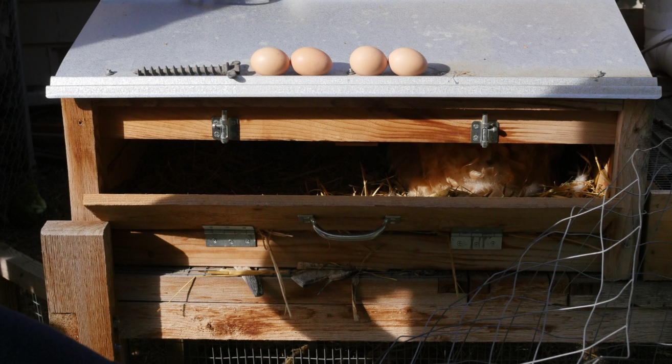 chicken coop egg nesting box