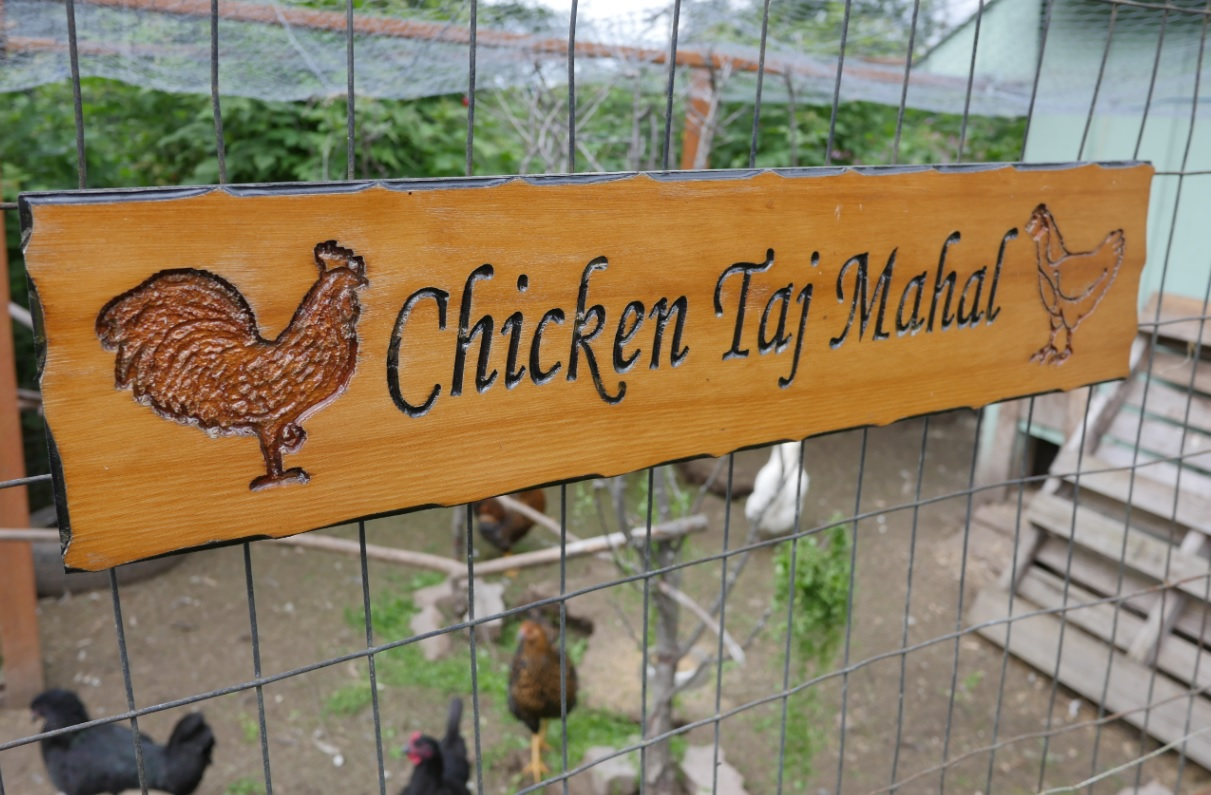 chicken taj mahal sign