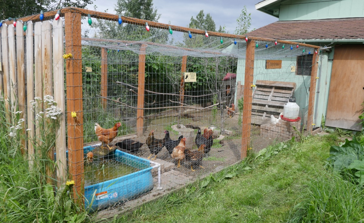 chicken coop in Eagle River, Alaska