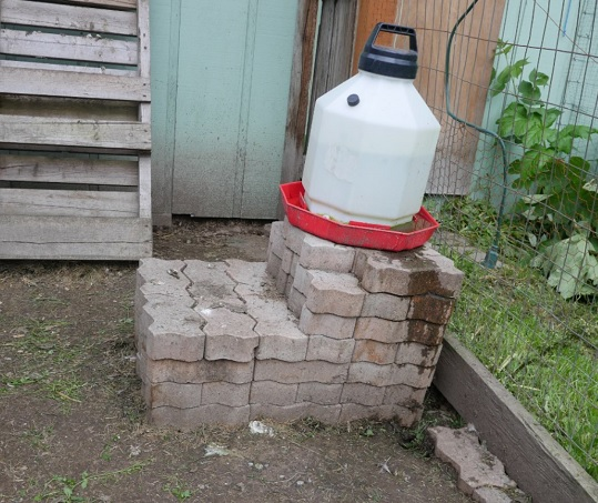 raised chicken waterer