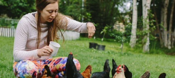 Ashley Taborsky feeding backyard urban hens