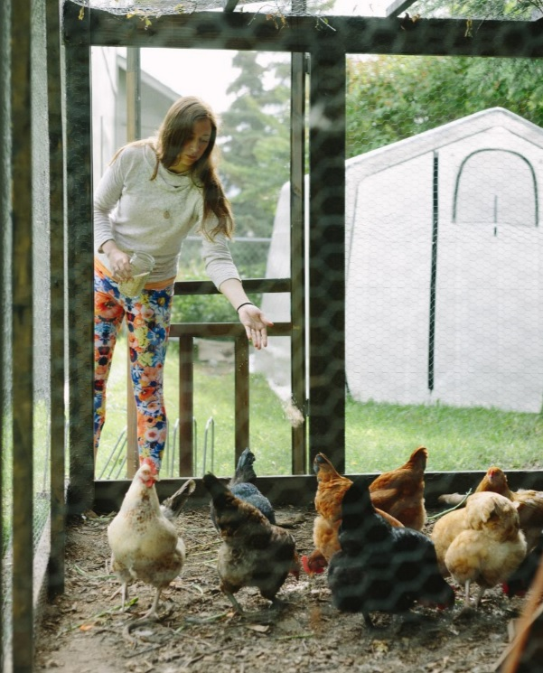 Ashley Taborsky feeding chicken coop