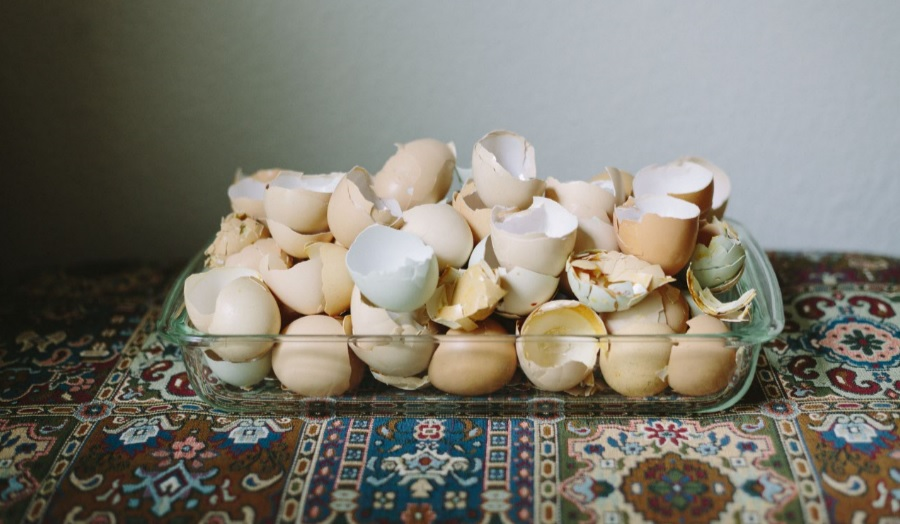 multi colored egg shells