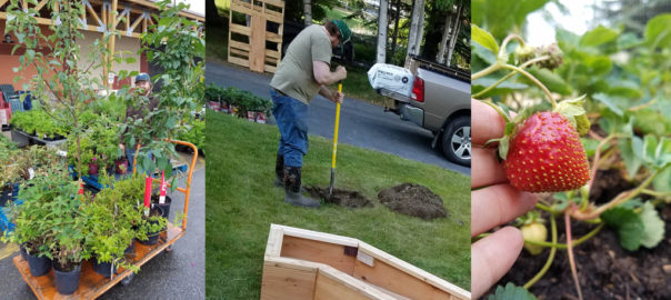 Planting Perennial Edibles in the Frontyard