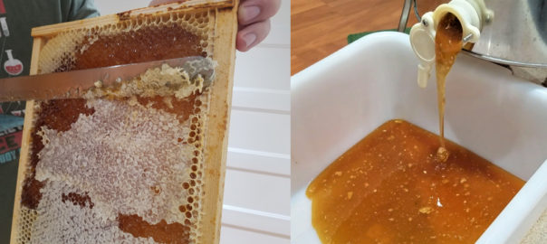 scraping wax off honey frame & raw honey flowing
